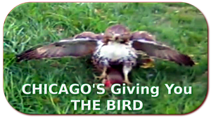 CHICAGO'S Giving You THE BIRD by paradigm-shifting