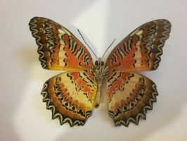 Leopard Lace Wing Spread Ventral View 001 by death-pengwin