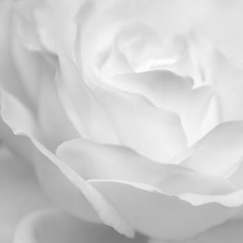 rose infrared by photofairy