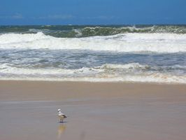 Seagull at the Beach by RubyReminiscence