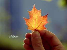 Autumn by narare