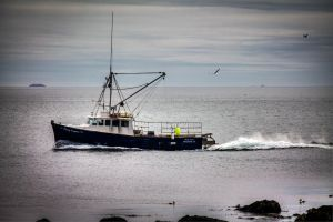 The Fundy Express by steverankin