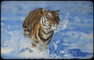 Tiger Going for A Splash by paulneptune