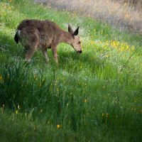 Lawn mower by kayaksailor