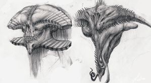 Creature Head Sketches by LindseyWArt