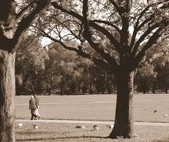 romance in the park by rachael7