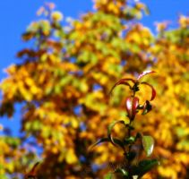 Autumn by Andenne