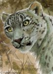 ACEO Snow Leopard by sschukina