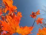 Autumn Leaves 1 by XxSilverOwl13xX