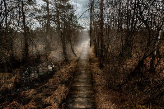 Pathway Through The Marshes by Burtn