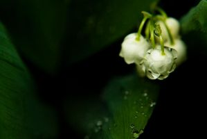 Lily of the valle2 by Liquid82