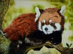 Red Panda by tempelziege