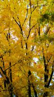 Yellow Trees by Mamas-Art
