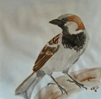 House Sparrow 3 by IckyDog