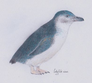 Day 29 - Penguin by Dontknowwhattodraw94