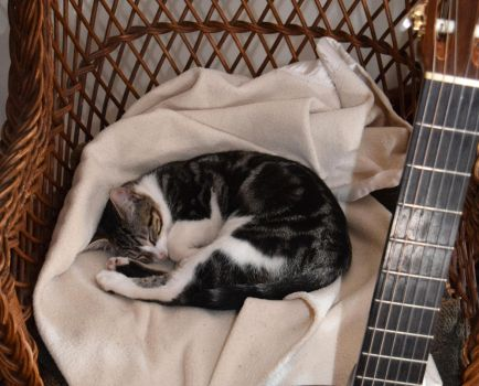 Napping Chester by Therese-B