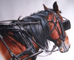 Bay Amish Horse in Watercolor by SREquineImages