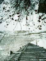 rails by ribes-rubrum