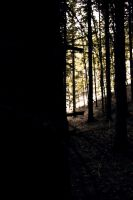 coniferous forest by AgizZz