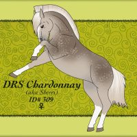 309 DRS Chardonnay by StableDaydreams