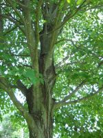 Tree Stock 19 by Orangen-Stock