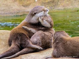 Otter lovers by Vitaloverdose