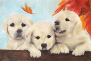 Fall Goldie Puppies by CPT-CUPCAKE-art
