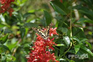 Butterfly And Red Flowers [SHOT 2] by pfgun0
