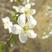 Spring time by Iulia-Oprinesc