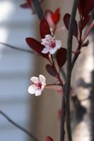 Flower 013 by MonsterBrand-stock