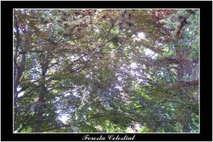 Foresta Celestial by Druida73