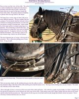 Draft Horse Working Harness II by lantairvlea