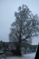 snowy Tree by Cora-Leigh