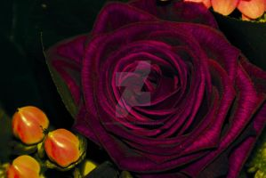 fleur photo 1 by cooliographistyle