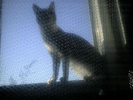 Irupe playing in window by pattsy