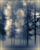Tall Trees In The Fog by bamako