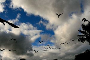 Flying Home by Tinap