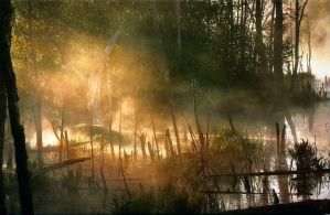 Morning on the lake in the woods '6' by AlloxaFirst