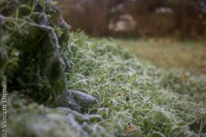 Frozen Greengrocer's delight by Vcent