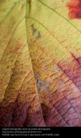 Leaf Texture 2 by Polstar-Stock