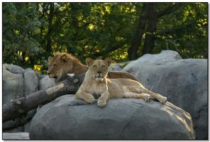Royal Couple by LoneWolfPhotography