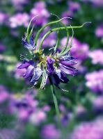Funky in Purple by barefootphotos