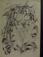 Snow leopard  1975 by teiirka