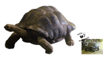 Cut-out stock PNG 100 - walking tortoise by Momotte2stocks