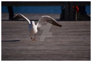 Acceleration by Skyrover