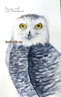 #227 Snowy owl by Doodle-of-the-day