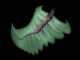 Broad Leaf Apophysis Fern by Gibson125