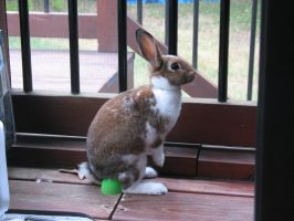 My Bunny... Sitting on an Easter Egg... by SpiritInSpace