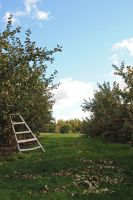 Orchard 2 by LucieG-Stock