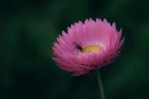 a flower and a fly by Amalus